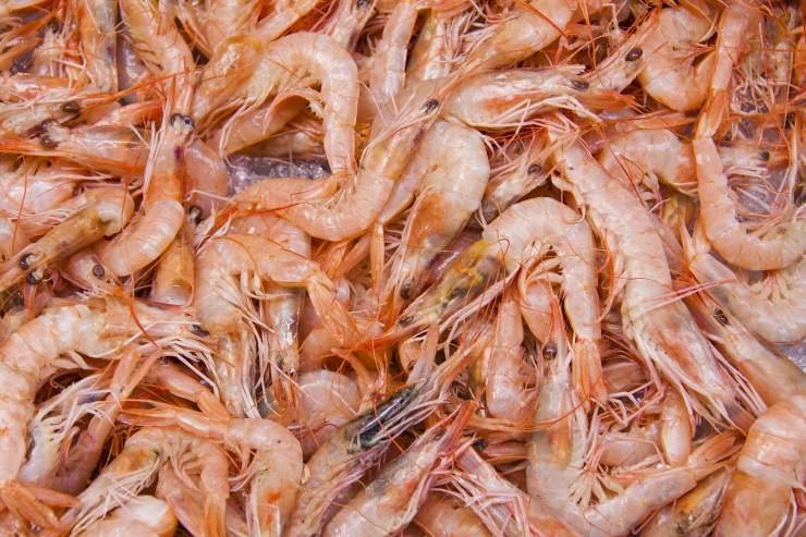 shrimp-83295_1920